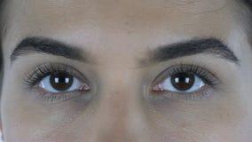 Fermez-vous des beaux yeux femelles, en regardant in camera Photos libres de droits