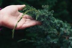 Fermez-vous des branches de fourrure-arbre du ` s de fille Photo stock