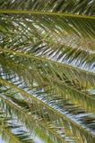 Fermez-vous des branches de palmier et du ciel bleu Photographie stock libre de droits