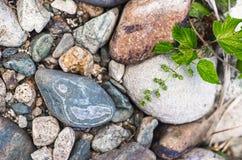 Fermez-vous des cailloux sur une berge de montagne, texture colorée Photo libre de droits