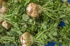 Fermez-vous des celeries frais sur un compteur dans un bazar turc typique de greengrocery à Eskisehir, Turquie Images stock