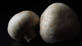 Fermez-vous des champignons blancs délicieux sur le fond noir Vue Le concept de la nutrition appropriée banque de vidéos