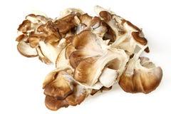 Fermez-vous des champignons de Maitake Photo libre de droits