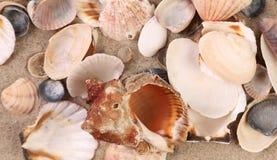 Fermez-vous des coquilles de mer. image stock