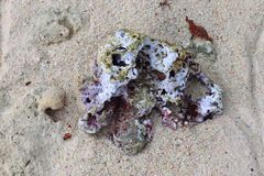 Fermez-vous des coraux à la plage sur l'île Seychelles de paradis image stock