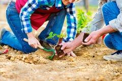 Fermez-vous des couples supérieurs méconnaissables plantant peu de seedlin Photos stock