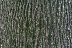 Fermez-vous des détails d'écorce d'arbre - fond ou donnez une consistance rugueuse Images stock