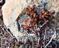 Fermez-vous des feuilles contre la roche Photographie stock libre de droits