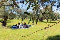 Fermez-vous des feuilles d'olivier sur le fond de pique-nique de famille de tache floue Image libre de droits