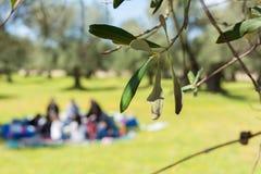 Fermez-vous des feuilles d'olivier sur le fond de pique-nique de famille de tache floue images stock