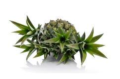Fermez-vous des feuilles fraîches d'ananas Photographie stock