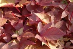 Fermez-vous des feuilles jaunes roses rouges image stock