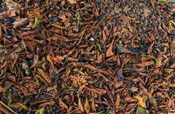 Fermez-vous des feuilles tombées images stock