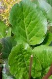 Fermez-vous des feuilles vertes fraîches rentrées un jardin photos stock