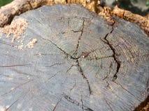 Fermez-vous des fissures dans le tronçon coupé du tronc d'arbre photographie stock