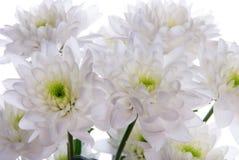 Fermez-vous des fleurs blanches Photo stock