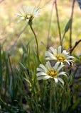 Fermez-vous des fleurs de forêt dans le bois photos libres de droits