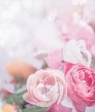 Fermez-vous des fleurs de rose en pastel au fond de bokeh Salutation de fête Photographie stock