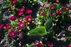 Fermez-vous des fleurs en parc image libre de droits