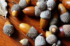 Fermez-vous des glands de chêne se trouvant sur la table de teck Images stock