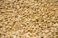 Fermez-vous des grains de café peu profonds de foyer image libre de droits