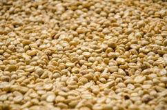 Fermez-vous des grains de café peu profonds de foyer photo stock