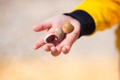 Fermez-vous des mains d'enfant tenant des coquillages Photo stock