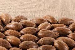 Fermez-vous des noix de pécan Photo libre de droits