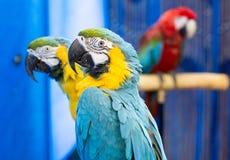 Fermez-vous des perroquets photo libre de droits