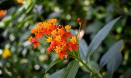 Fermez-vous des petites fleurs oranges et jaunes image stock