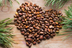 Fermez-vous des pignons Koraiensis de pinus Photos stock