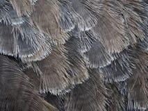 Fermez-vous des plumes d'autruche images stock
