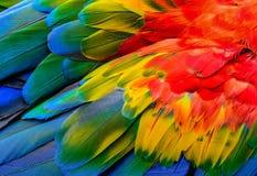 Fermez-vous des plumes du ` s d'oiseau d'ara d'écarlate photo libre de droits
