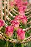 Fermez-vous des roses roses dans une rangée pendant d'une structure métallique à l'intérieur d'une usine de fleur située dans l'E Images stock