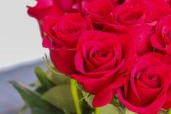 Fermez-vous des roses rouges et des baisses de l'eau Image stock