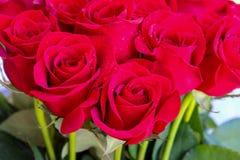 Fermez-vous des roses rouges et des baisses de l'eau Photographie stock