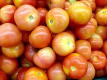 fermez-vous des tomates Photographie stock libre de droits
