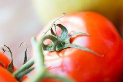 Fermez-vous des tomates rouges juteuses mûres Photos libres de droits