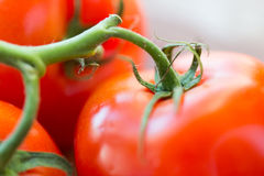 Fermez-vous des tomates rouges juteuses mûres Images libres de droits