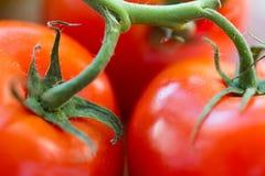 Fermez-vous des tomates rouges juteuses mûres Image stock