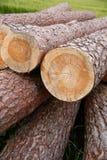 Fermez-vous des troncs d'arbre empilés dans un domaine Photo stock