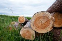 Fermez-vous des troncs d'arbre empilés dans un pré Photos stock