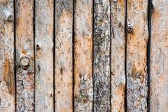 Fermez-vous des troncs de pin alignés Images stock