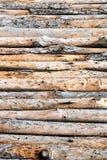 Fermez-vous des troncs de pin alignés Photos libres de droits