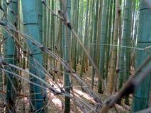 Fermez-vous des troncs en bambou à la forêt en bambou d'Arashiyama photos libres de droits