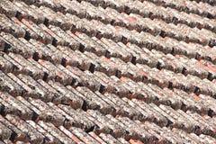 Fermez-vous des tuiles de toit couvertes dans le lichen photographie stock libre de droits