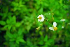 Fermez-vous des wildflowers vibrants dans le domaine ensoleillé Images libres de droits