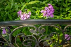 Fermez-vous du banc de parc et des fleurs pourpres dans un jardin Images libres de droits