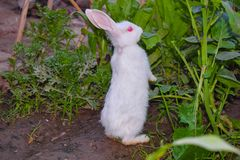 Fermez-vous du beau lapin blanc dans un jardin image libre de droits