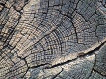 Fermez-vous du beau tronçon d'arbre de coupe texturisé photographie stock